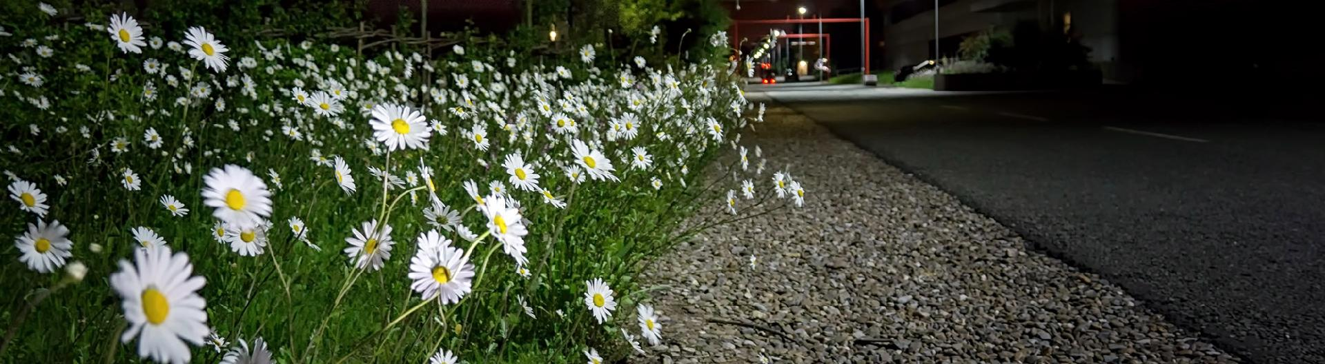 cars-and-flowers.jpg