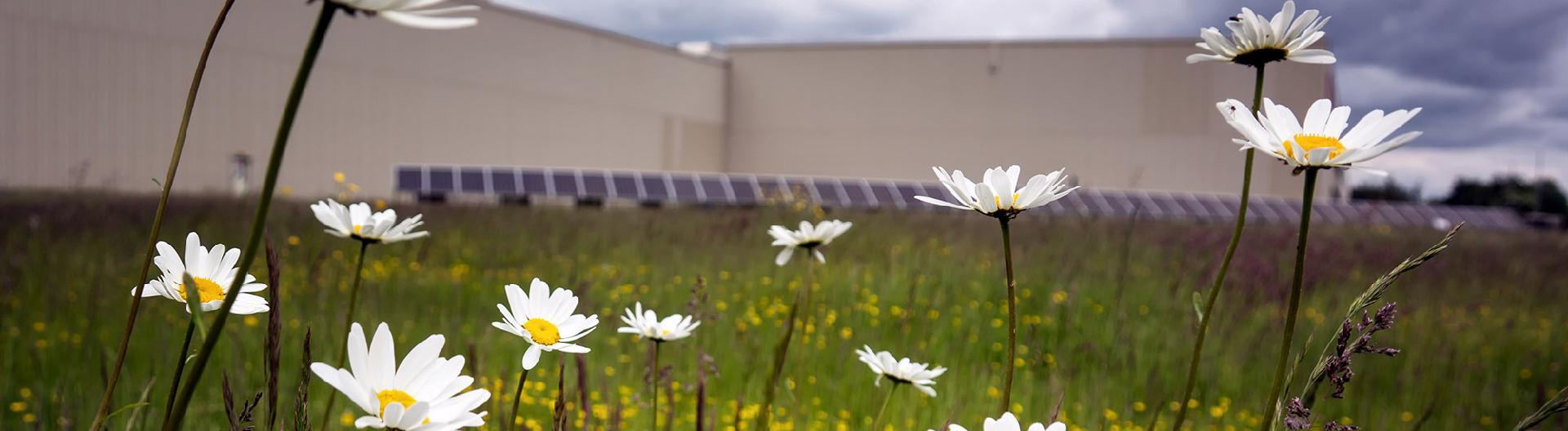 factory-flowers.jpg